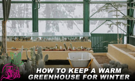 How to Keep a Warm Greenhouse for Winter
