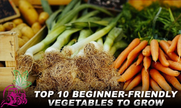Top 10 Beginner-friendly Vegetables to Grow