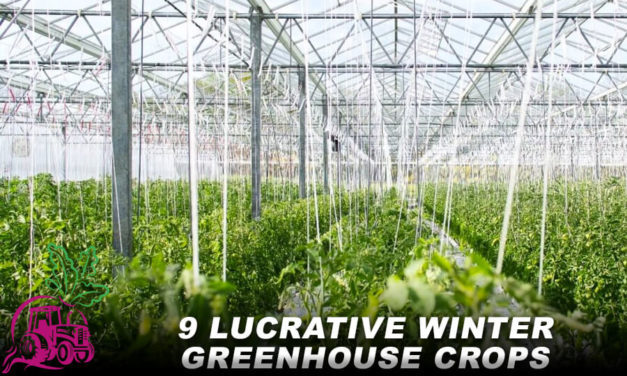 9 Lucrative Winter Greenhouse Crops
